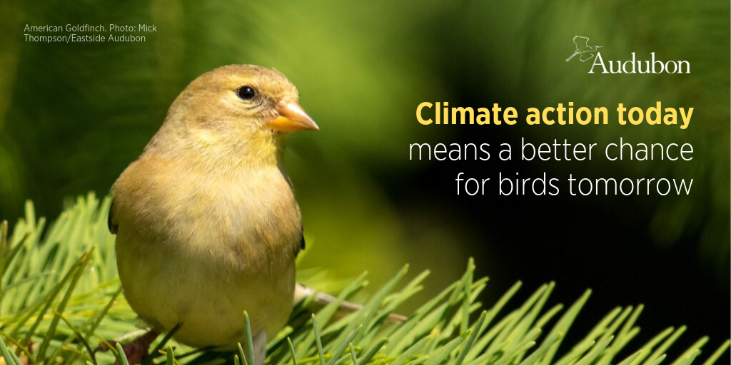 Audubon climate action today